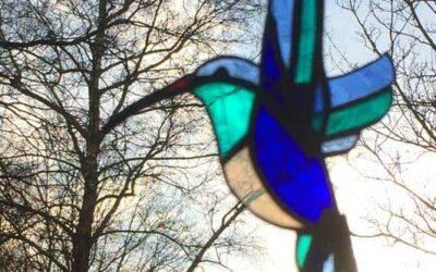 'Wintervaste' kolibrie